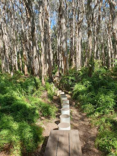 Paperbark Forest Board Walk