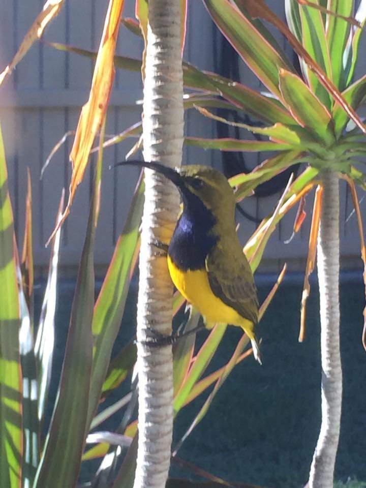 Sunbird at sunbird gardens